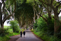 The Dark Hedges, Northern Ireland. The Dark Hedges tunnel-like avenue of intertwined beech trees, planted in the 18th-century.  Northern Ireland Royalty Free Stock Photos