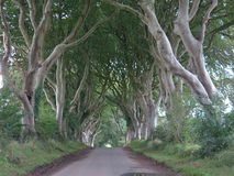 The Dark Hedges. Refers to a lonely solitary lane in County Antrim in Northern Ireland stock photos