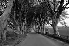 The Dark Hedges road and tree grayscale photography. The Dark Hedges road and tree grayscale Royalty Free Stock Images