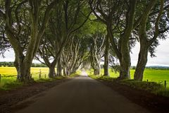 The Dark Hedges stock images