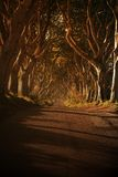 'The Dark Hedges' Stock Photos