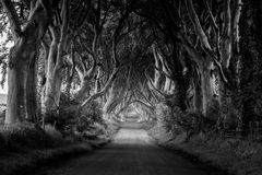 The dark hedges. Treelined road. Location: the Dark Hedges, a country road in County Antrim Northern Ireland lined with 300 year old beech trees Stock Image