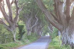 The Dark Hedges.Ulster stock photography