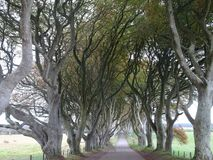 The Dark Hedges - Avenue of beech trees on the way to the Giants Causeway in the north of Ireland, Europe Royalty Free Stock Image