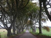The Dark Hedges - Avenue of beech trees on the way to the Giants Causeway in the north of Ireland, Europe Stock Photos