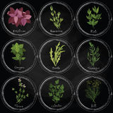 Dark herbs set Royalty Free Stock Photo