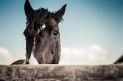 Dark horse behind the fence Royalty Free Stock Photos