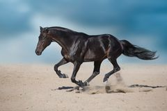 Dark horse in desert stock photo
