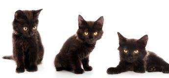 Dark kitten stock images