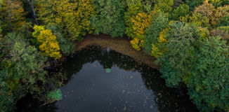 Dark lake in the shadow of hornbeam trees. Royalty Free Stock Photos
