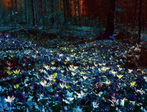 Dark land. Field of flowers in the woods. The mood is darkly atmospheric Stock Images