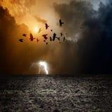 Dark landscape. Big arable field, dark stormy sky with lightning, flock of flying ravens, crows in dark sky Royalty Free Stock Image