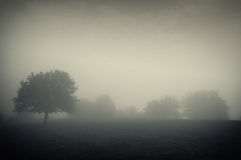 Dark landscape with fog and trees. A dark landscape of a foggy cold morning with trees on a meadow Stock Images