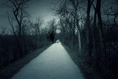 Dark landscape in the forest Royalty Free Stock Image