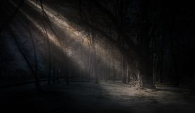 Dark forest, rays of sunlight through the trees, a magical forest stock photography