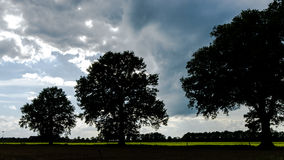 Dark Landscape with Oak Tree and Moody Sky Stock Photos