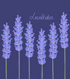 Dark lavender background Royalty Free Stock Photography