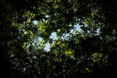 Dark Leaf Canopy Royalty Free Stock Images