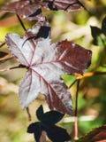 Dark leaf royalty free stock photo