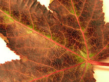 Dark Leaf Macro Stock Photography