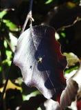 Dark leaf and spider in park Stock Photo