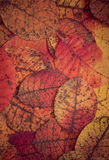Dark leaves background stock image