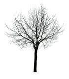 Dark leaves free isolated tree Royalty Free Stock Photography