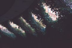 Dark, Leaves, Plants Stock Photography