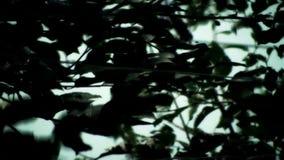 Dark Leaves stock video
