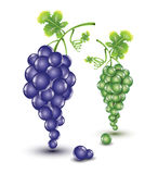 Dark and light grapes Royalty Free Stock Images