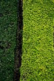 Dark and light green grass background stock image