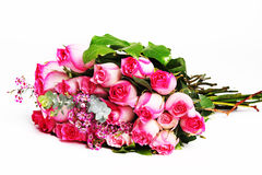 Dark and light pink roses. Pile of pink rose blossoms on white background Stock Images