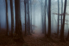 Dark and lonely path into foggy forest. Gloomy dark autumn day. Filtered image Stock Photos