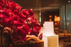 Grand Hyatt Singapore Dark luxury hotel interior design. Dark luxury hotel interior design with classic furniture royalty free stock photos