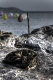 Dark macabre photo of a tabby cat resting on a stone shore Stock Images