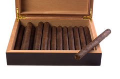 Dark maduro cigar resting on humidor Royalty Free Stock Image
