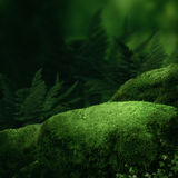 Dark magic forest. With big moss stones Royalty Free Stock Photography
