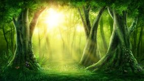 Dark magic forest. With sunshine Stock Image