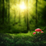 Dark magic forest. And sunshine Royalty Free Stock Photos