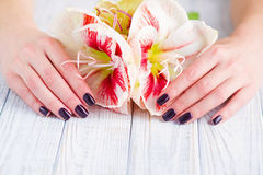 Dark manicure and flowers Stock Photography