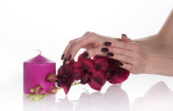 Dark manicure, purple orchid and candle. Woman hands with dark manicure touching dark purple orchid; isolated with pink candle stock photography