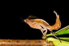 Dark mantis Stock Photo