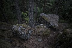 Dark massive boulders covered in moss in the woods against stormy skies with tree trunk. Large stones in the woods awaiting storm royalty free stock photography