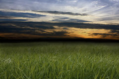 Dark meadow. Dark background with grass and clouds Royalty Free Stock Photo