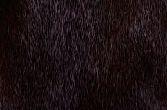 Dark mink fur Stock Images