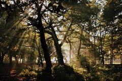 Dark misty forest Stock Photos