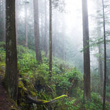 Dark misty forest Royalty Free Stock Photos