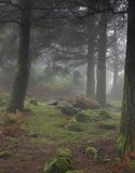 Dark misty forest, home of hobbit and elf Royalty Free Stock Image