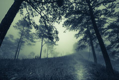 Dark misty forest path in fog, Halloween concept. Vintage style of dark misty forest path in fog, Halloween concept with grainy and vintage style royalty free stock photo