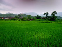 Dark Monsoon Landscape Stock Images
